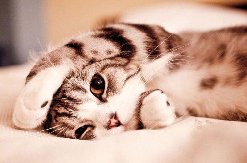 Ինչու է կատուն մարդու ցավոտ տեղին պառկում