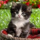 Ֆրանսիայում ավելի քան 200 կատուներ անհայտ թույնի զոհ են դարձել