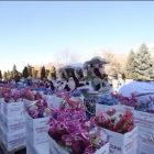 Video. 10 օր շարունակ Գ.Ծառուկյան բ/հիմնադրամը Ամանորի նվերներ է բաժանել ավելի քան 350.000 երեխայի