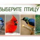 Թեստ. ընտրեք թռչուններից մեկին