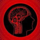Մարդկության IQ-ն աստիճանաբար նվազում է. նորվեգացի գիտնականներ