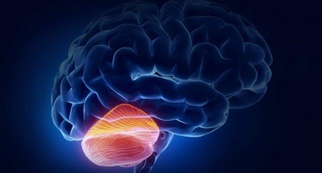 Վաղաժամ ծննդաբերությունը բացասաբար է անդրադառնում երեխայի ուղեղիկի վրա. Ուսումնասիրություն
