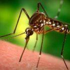Գիտնականները պարզել են,որ մոծակները սիրում են 4 տեսակի մարդկանց. իսկ դուք մտնու՞մ եք նրանց մեջ