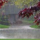 Առաջիկա օրերին սպասվում է անձրև և ամպրոպ