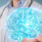 Ինտելեկտն արդյոք կախվա՞ծ է ուղեղի չափերից