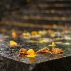 Եղանակը Հայաստանում. սպասվում է անձրեւ