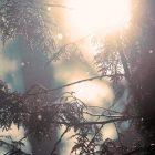 Հայաստանում օդի ջերմաստիճանը կբարձրանա 5-6 աստիճանով