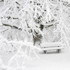Առանձին շրջաններում սպասվում է ձյուն և մառախուղ