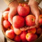 Ինչ կկատարվի օրգանիզմում 2 ամիս շարունակ օրը 1 խնձոր ուտելու դեպքում