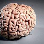 Տասը վտանգավոր սովորություն, որոնք աստիճանաբար սպանում են ուղեղը
