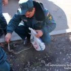 Փրկարարները բռնել են  2 սահնօձ, 1 իժ, 1 գյուրզա տեսակի օձ