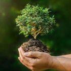Այսօր շրջակա միջավայրի համաշխարհային օրն է