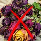 Ինչու չի կարելի տանը պահել չորացրած ծաղիկներ