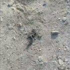 Ներքին Չարբախում սեւ կարիճներ են ապրում