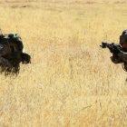 Մեկնարկելու է ռազմավարական զորավարժություն պետական եւ ՏԻՄ մարմինների ընդգրկվածությամբ