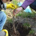 Հայաստանում բնակչության թվով ծառեր տնկելու միջոցառում է նախապատրաստվում. Նախարարը «ամբիցիոզ» գաղափարի փակագծերը չբացեց