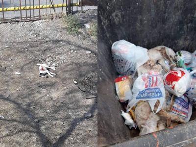 Երեւանում դպրոցի տարածքում կրակել են շներին՝ վտանգելով երեխաներին. Զինղեկը դիերը գցել է աղբամանը