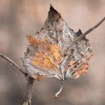 Դեկտեմբերի 14-ից ջերմաստիճանը կբարձրանա 5-7 աստիճանով, Տավուշում և Սյունիքում կհասնի +18․․․+20 աստիճանի. Սուրենյան