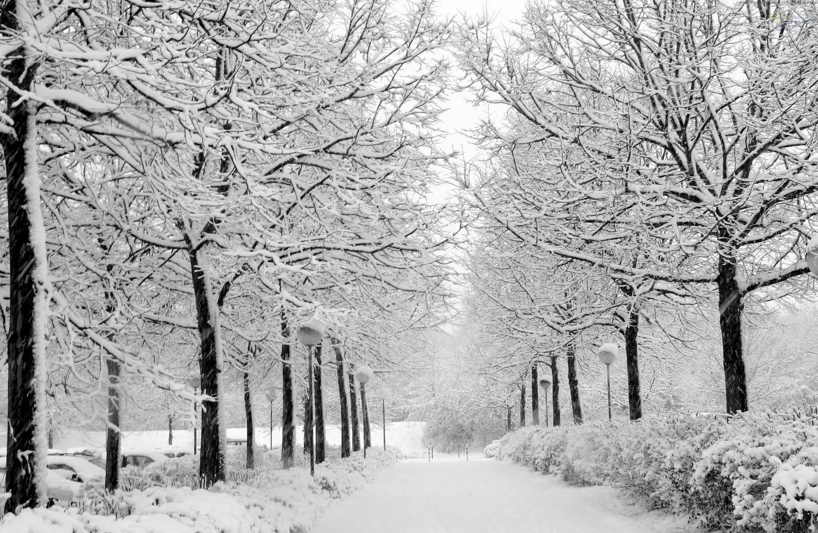 Ձմեռվա ցուրտն օգնում է նիհարել