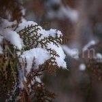 Առաջիկա շաբաթ օրը Սյունիքում եւ Արցախում, իսկ կիրակի օրը Հայաստանի մարզերի մեծամասնությունում սպասվում է ձյուն
